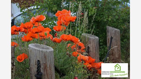 Themenbild: Garten