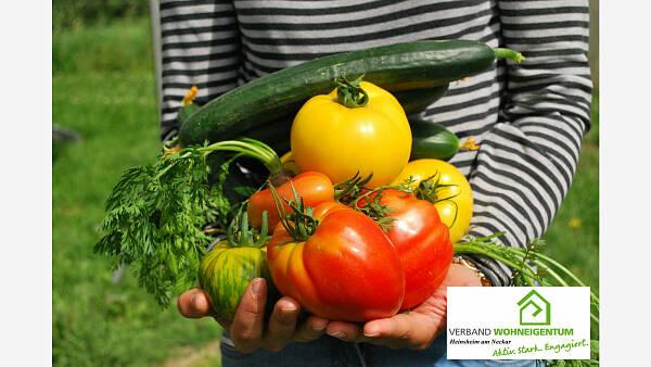 Themenbild: Gemüse