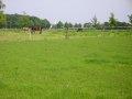Pferdekoppel am Egelsberg
