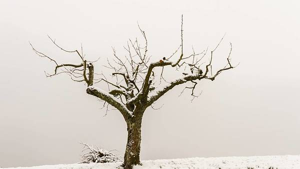 Themenbild: Baumschnittkurs